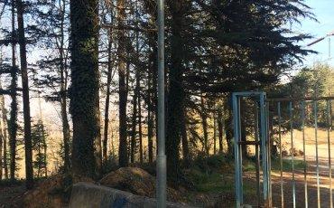 Sapanca İl Orman AŞ